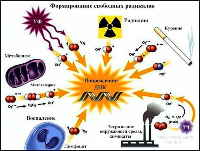 article Свободные-радикалы-и-антиоксиданты