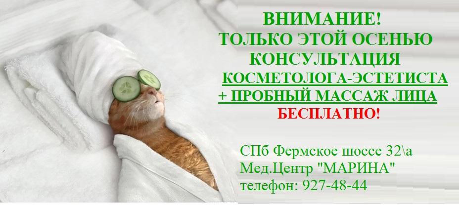 kot_prikol_7052